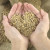 Deponovana semena srpskih sorti u Svetski trezor na Svalbardu