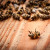 Viroze i nedostatak paše uzrokuju gubitak imuniteta pčela, ipak nisu svi na gubitku!