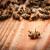 Pomor pčela u RH? Situacija nije tako alarmantna, ali navodi mogu biti opasni