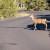 Tko je odgovoran kada vozilo naleti na divljač?