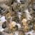 Bacili i spalili košnice - uništeno 600.000 pčela!