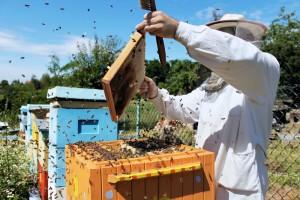 Srbija u poslednjih 13 godina izgubila više od 10.500 pčelinjih društava