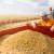 Organska soja uspeva u područjima dobrim za uzgoj kukuruza