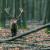 DZS: U 2020. odstrijeljeno 5.654 jelena i gotovo 40.000 divljih svinja