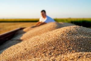 Mićo Petrović: Teško je ako za 100 kg mineralnog đubriva moramo dati 300 kg pšenice