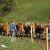 Poljoprivrednici u EU sve stariji - može li ZPP to da promeni?