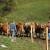 Poljoprivrednici u EU sve stariji - Glavne prepreke zemljište i kapital