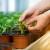 Lokvina: Na vrhu s najboljim ekološki certificiranim sjemenom, garantirano bez GMO