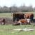 Mlijeko od krava s farme ili sa slobodne ispaše - koji je vaš izbor?