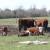 Mlijeko od krava sa farme ili sa slobodne ispaše - koji je vaš izbor?