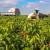 Šafram organizira edukaciju o proizvodnji začinske paprike!