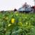 Tko su najvećih 10 proizvođača paprike u Hrvatskoj?