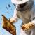 Usvojen Nacionalni program, pčelarima 14,8 milijuna kuna godišnje
