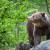 Medvedi upadaju u sela Nove Varoši - kradu kukuruz i napadaju ovce