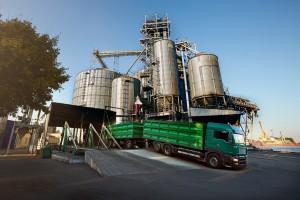 Prinosi kukuruza i pšenice u Srbiji mogli bi da budu uvećani za 20 odsto