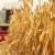 EP usvojio strategiju Od polja do stola - što sad čeka poljoprivrednike?