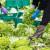 Uzgoj salate u Hrvatskoj - tko su TOP 10 proizvođača?