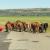 Europsko mlijeko loše kvalitete uništava afričke stočare?