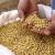 Skok cena: Soja 80 dinara, kukuruz 23,5, pšenica 21,6 dinara za kilogram
