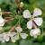 Zelena gnojidba: Rauola se sije postrno jer je vrlo otporna na sušu