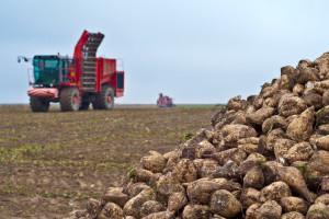 Zašto njemački poljoprivrednici odustaju od uzgoja šećerne repe?