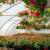 Proizvodnja cvijeća u Hrvatskoj - tko su TOP 10 uzgajivača?