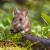 Kako zaštititi voćke od glodara i divljači?