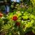 Uštedite vreme i napravite vrt koji se lako održava