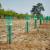 Kako pripremiti zemljište za podizanje zasada oraha?