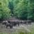 Kako protiv divljih svinja: Ministarstvo propisuje rok za postizanje biološkog minimuma