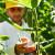 Rusija se priprema za rekordnu berbu povrća