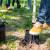 Otvoren novi rasadnik, Hrvatske šume izvozit će sadnice hrasta lužnjaka