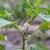 Zašto otpadaju cvjetovi i plodovi kod paprike, krastavca i pradajza?