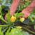 Povrće nakon kiše razboljeva - kako ga oporaviti na prirodan način