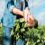 Ne postoje čudotvorna sredstva: U eko poljoprivredi je važna strategija!