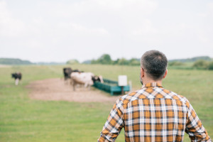Poticaj održivom povrtaku 22,6 miliona KM - dio odlazi i poljoprivredi