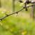 Crna pjegavost vinove loze - uticaj na prinos i suzbijanje