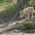 Njemačka ministrica poljoprivrede predlaže odstrijel vukova u nekim regijama
