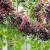 Biljka budućnosti za voćare: Isplativa proizvodnja zove
