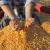 Kukuruz na Produktnoj berzi 27,3 dinara, pšenica novog roda - 21