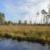 Suši se evropsko zemljište: Umjesto da upija ugljični dioksid, oslobađat će ga?