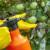 Lisne uši na jabuci suzbijte pripravcima od ulja neema, pelina ili češnjakom