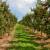 Za jesensku gnojidbu birajte eko gnojiva sa sporim otpuštanjem i dodanim kalcijem