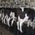 DZS: Proizvodnja mlijeka na OPG-ima u 2020. veća za 5,8 posto