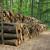 Drvna industrija je potentna gospodarska grana, ali treba ozbiljne investicije