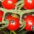 Uočena pojava zelene stenice na povrću - kako je suzbiti?