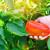 Kako prepoznati i spriječiti plamenjaču paprike?