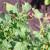 Riješite se štetnika insekticidom na bazi piretrina - primjenjivog i u eko proizvodnji