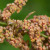 Kvinoja - majka svih žitarica čisti organizam od otrova
