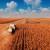 EU i Turska sve više traže rumunjski kukuruz